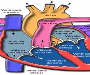 Innovan estudio del corazón en Coro