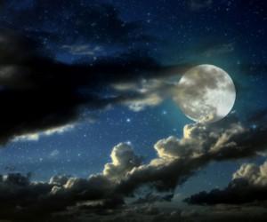 ¿Por qué la luna llena afecta a los animales?