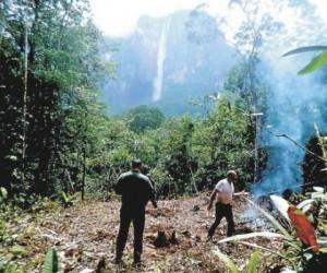 Denuncian deforestación de árboles frente al Salto Ángel