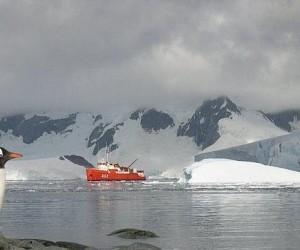 Australia propondrá la creación de gran área marina en la Antártida