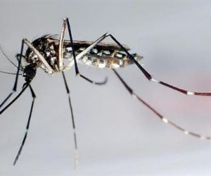 Dengue y chikungunya continúan en fase expansiva