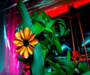 Esta es la primera flor nacida en la Estación Espacial Internacional