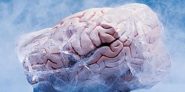 Recuperan un cerebro de conejo tras ser criogenizado por largo tiempo